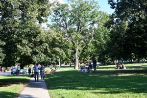 Three Subsidy Programs To Revitalize Brno Public Green Spaces In 2022