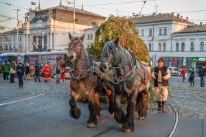 Brno's Christmas Tree To Be Transported to Namesti Svobody This Weekend