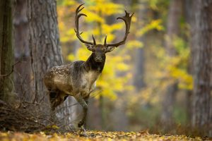 Deer Takes Hunter's Weapon and Hides in the Forest