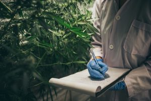 St. Anne's Hospital in Brno Builds Medical Cannabis Research Plant