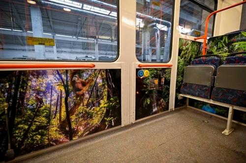 tram-design-brno-credit-dpmb (5)